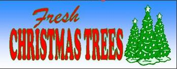 Fresh Christmas Trees Banner for selling roadside lots